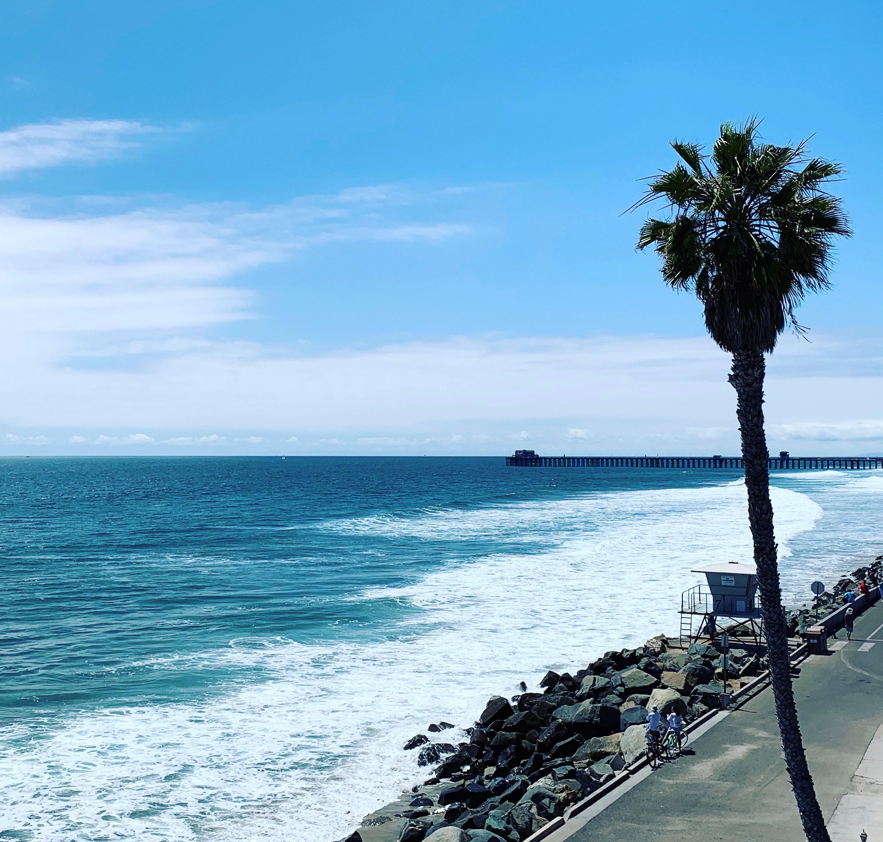 california beach rental palm tree-d beach